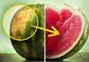 Искусен фармер го откри трикот на годината: Вака се одбира најсочната лубеница и тоа секој пат
