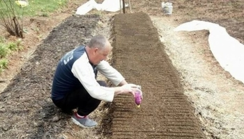 Лесно и евтино се садат, носат профит над 2.000 евра