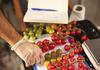 Старт-ап од Абу Даби одгледува домати во пустина